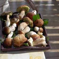 Funghi-porcini-della-Valsassina